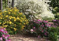 Rhododendron L.